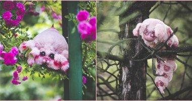 """Khi những con vật đáng sợ biến thành bông sẽ """"cưng muốn xỉu"""" thế này"""