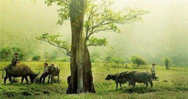 """""""Ngây ngất"""" trước cảnh đồng quê đẹp như tranh ở Việt Nam"""