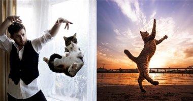 """Bạn chưa biết cách """"diễn sâu"""", hãy học hỏi dòng họ nhà mèo!"""