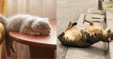 """Cạn lời với mấy chị mèo lười bạ đâu ngủ đấy """"bất chấp thị phi"""""""