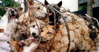 Hình ảnh tàn nhẫn tại một lễ hội thịt chó gây tranh cãi