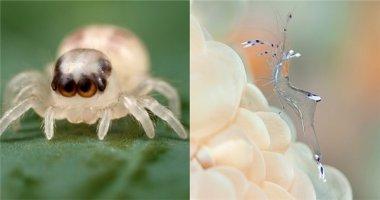 Những loài vật trần như nhộng vì trong suốt đến xuyên thấu
