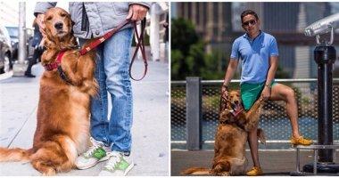 """Tan chảy trước cô cún """"cuồng ôm"""" nổi tiếng nhất Instagram"""