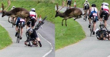 """""""Quá thốn"""": người đàn ông đang đua xe bị hươu nhảy qua đầu"""