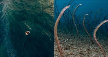 Những hình ảnh kinh dị khiến bạn không dám thò chân xuống biển