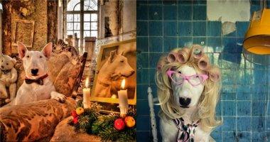 Gặp gỡ cô chó Bull có ảnh nghệ thuật đẹp nhất thế giới