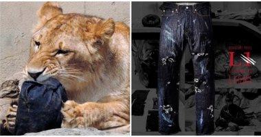 """Sốt xình xịch ý tưởng """"sư tử xé quần để có vết rách tự nhiên"""" ở Nhật"""