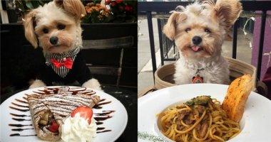"""Chú chó """"sống ảo"""" gây bão mạng xã hội bởi sở thích chụp hình với đồ ăn"""