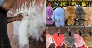 Sự thật gây sốc đằng sau những chiếc móc khóa lông thỏ ở Singapore