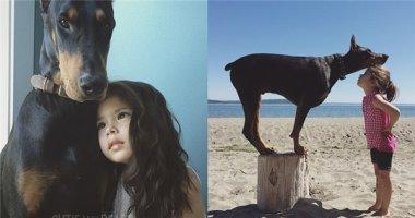 Tình bạn siêu dễ thương giữa cô nhóc tí hon và chú chó khổng lồ