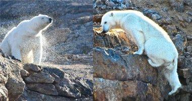 Chùm ảnh đau lòng về thảm cảnh của loài gấu Bắc cực