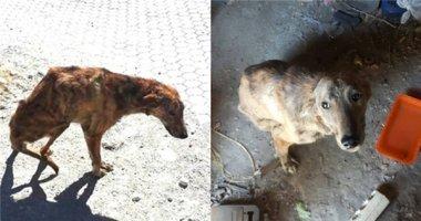 Cảm động cô gái bỏ cả chuyến du lịch để cứu chú chó gãy xương sống