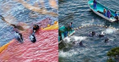 Đến hẹn lại lên: Những hình ảnh ghê rợn về mùa săn cá heo 2016 ở Nhật