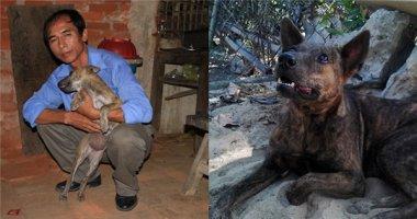 Câu chuyện kì lạ về chú chó Rex đi lạc qua lời kể của thầy giáo nghèo