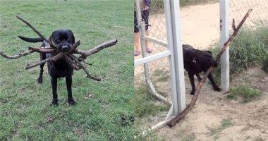 """Có một cuộc chiến vĩ đại mang tên """"Con chó và khúc cây"""""""