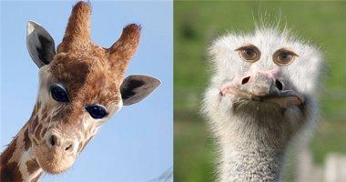 Chuyện gì xảy ra khi động vật có mắt ở đằng trước mặt?