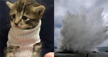 Tan chảy trước hình ảnh chú mèo con sống sót qua cơn bão