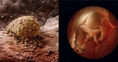 Bộ ảnh tuyệt vời cho biết bạn đã lớn lên kì diệu thế nào trong bụng mẹ