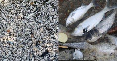 Cá chết hàng loạt, nổi trắng xoá mặt Hồ Tây