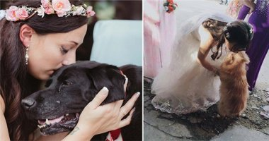Xúc động những hình ảnh của chó cưng ngày chủ lấy chồng