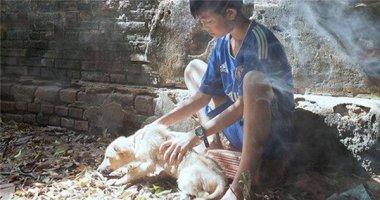 Cư dân mạng xúc động với bức ảnh chú chó ốm không muốn làm phiền chủ