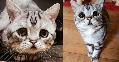 """Tan chảy với chú mèo nhỏ có khuôn mặt """"buồn ơi là sầu"""""""