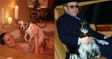 Ghen tị với cuộc sống xa hoa của các bé chó nhà người nổi tiếng