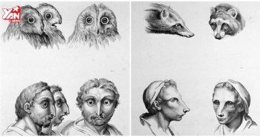 Con người sẽ như thế nào nếu tiến hóa từ các loài động vật?