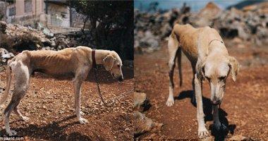 Chàng trai bỏ cả chuyến du lịch để cứu chú chó gầy trơ xương
