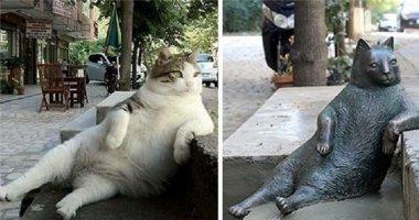 Chú mèo này có gì đặc biệt khiến người dân phải lập tượng tưởng nhớ?