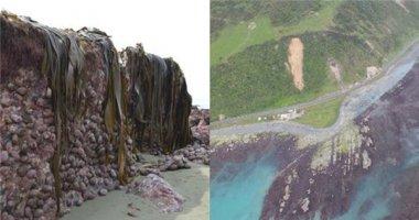 Bất ngờ đáy biển New Zealand bị nhấc lên 2 mét sau trận động đất