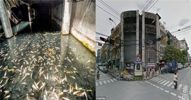 """Ngỡ ngàng bể cá """"khổng lồ"""" tồn tại hơn 10 năm giữa lòng Bangkok"""