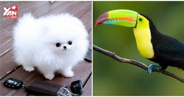 Đây là 10 loài thú cưng có giá bằng cả gia tài