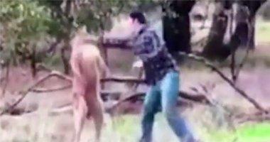 """Cười nghiêng ngả khi chủ đấm vỡ mặt kangaroo vì dám """"bắt nạt"""" chó cưng"""