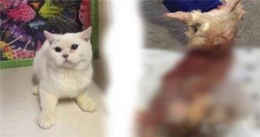 Phẫn nộ cô gái lột sạch lông mèo rồi trả lại chủ cửa hàng vì tức tối