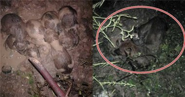 Cảm động chàng trai cứu mẹ con bầy chó ra khỏi bùn lầy đêm mưa bão