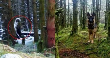 """Đi dạo trong rừng, phát hiện """"Quái vật chân to"""" trong truyền thuyết?"""