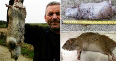 """Hoảng hồn loài chuột """"yêu quái"""" to bằng cả con mèo"""