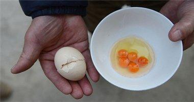 Người nông dân bất ngờ với trứng gà 5 lòng đỏ muốn tìm cũng chẳng thấy
