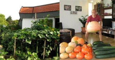 Cùng ngắm khu vườn sân thượng trĩu trái ngon của vợ chồng Việt tại Đức