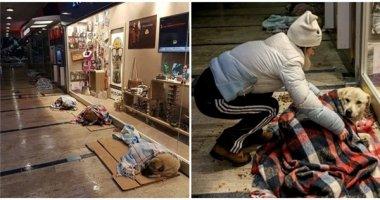 Tan chảy với tình thương dành cho chó mèo hoang ở Istanbul