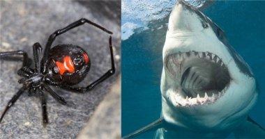Khiếp sợ trước top 10 loài động vật nguy hiểm nhất hành tinh