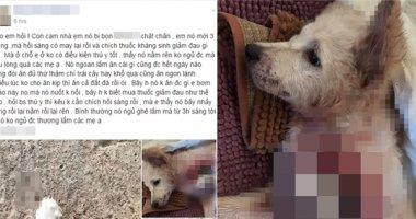 Xót xa hình ảnh chú cún đau đớn vì bị kẻ xấu chặt lìa một chân