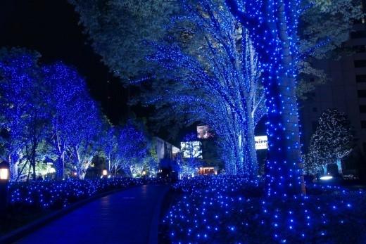 Đường Giáng sinh Xanh ngập tràn ánh sáng đã sẵn sàng chào đón bạn ngay từ 20/12 đến hết ngày 31/12. (Ảnh: Internet).