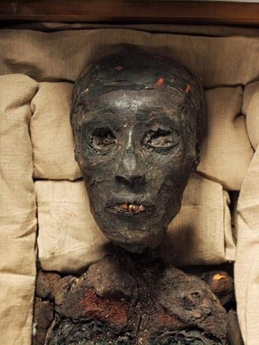 Ông Carnarvon được phát hiện chết do một vết muỗi cắn lây bệnh truyền nhiễm. Theo thống kê, chỉ 2 năm sau khi khai quật lăng mộ của pharaoh Tutankhamun, 22 người chết một cách đột ngột và bí ẩn.