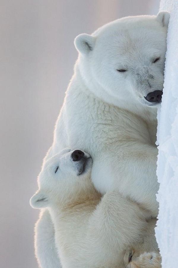 Giấc ngủ bình yên là khi có mẹ ở bên.