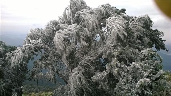 Tuyết bất ngờ rơi dày đặc tại Tam Đảo (Vĩnh Phúc)