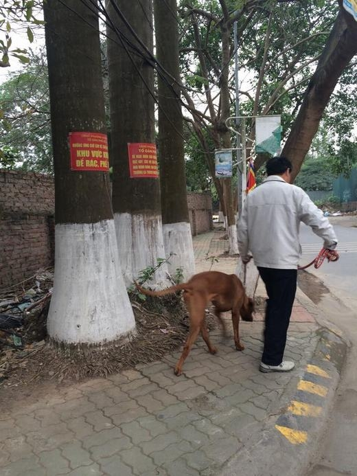 Chó dữ ngông nghênh đi lại khắp Thủ đô