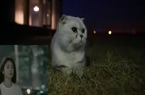 Cười thả ga với clip chế Hậu duệ mặt mèo