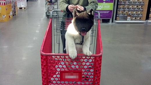 Trông Zora dễ thương không khác một em cún nhồi bông.